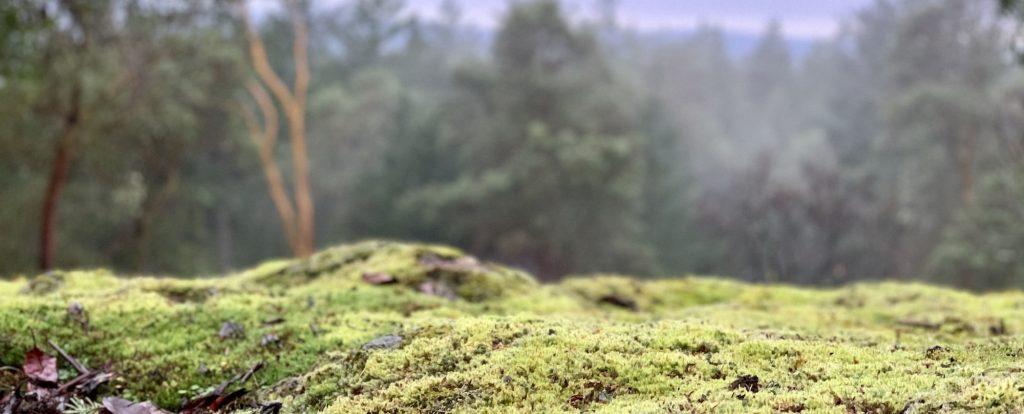 Mossy View Blog Header