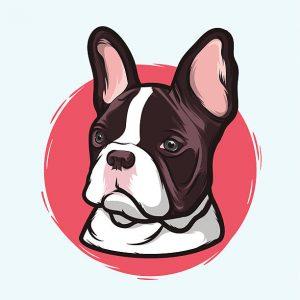 French bulldog illustration