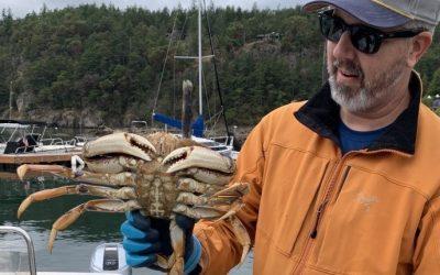Big Dungeness Crab