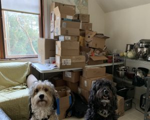 dogs in front of boxes