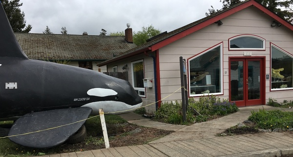 A life-size orca in the village of Eastsound on Orcas Island